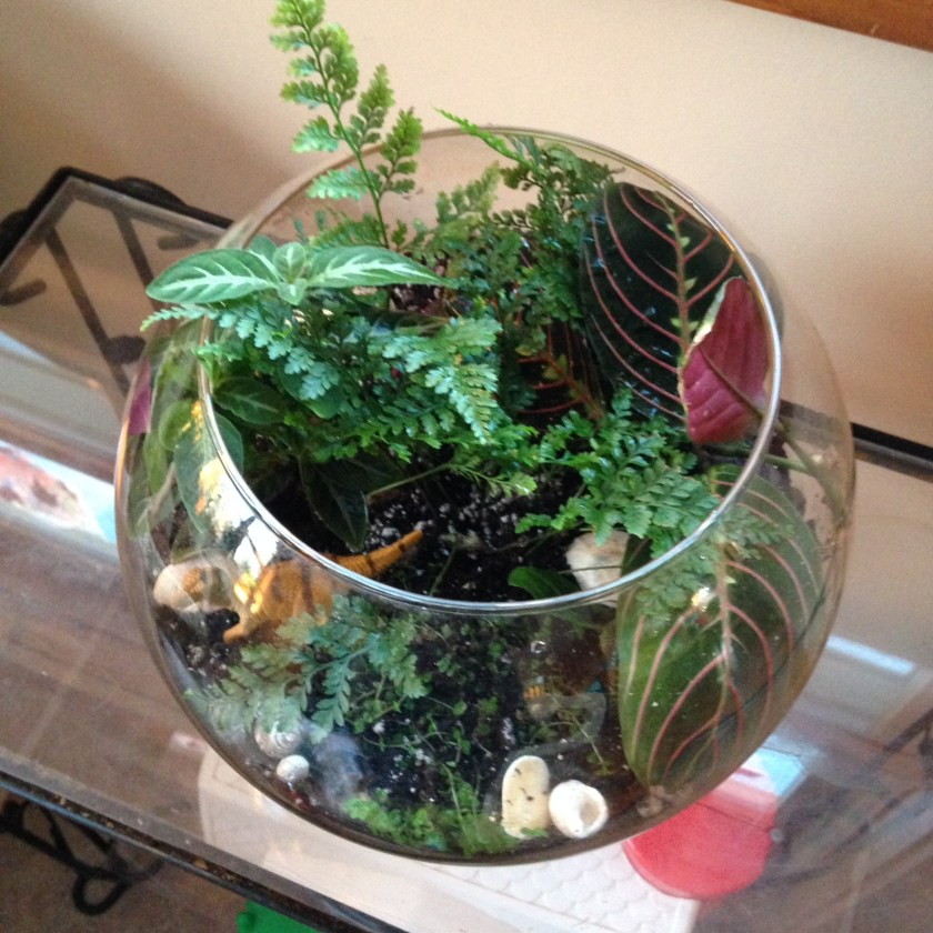 The completed terrarium!
