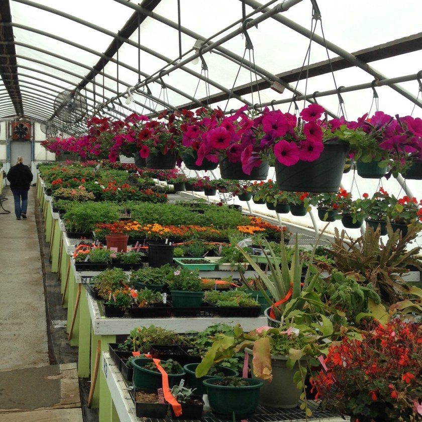 One of the greenhouses full of lush plants for sale.