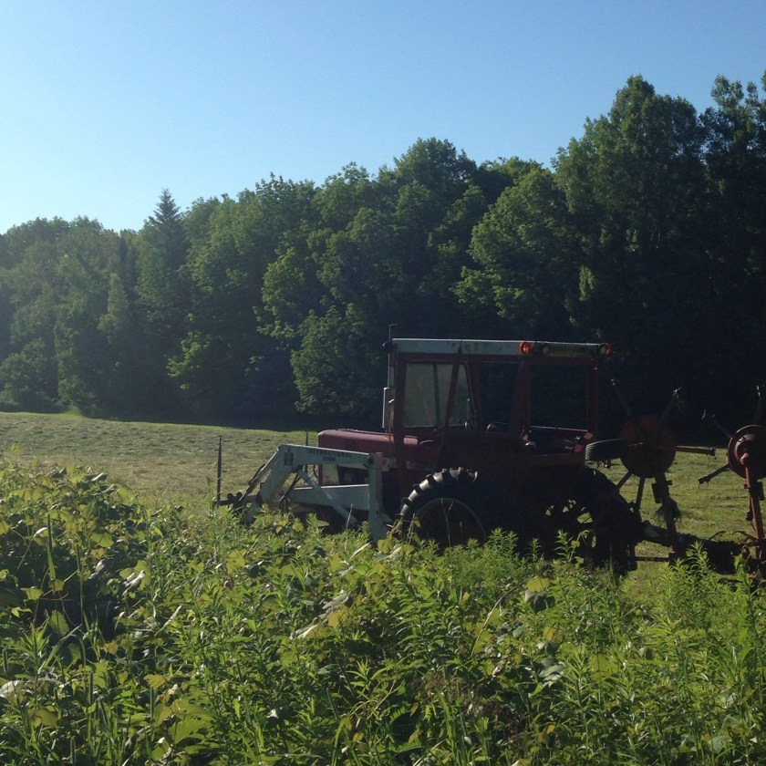 Tractor in the morning light.