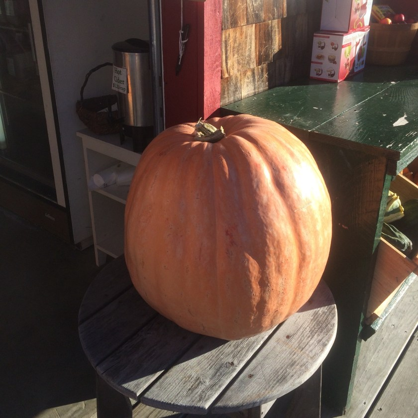 A large pumpkin on display.