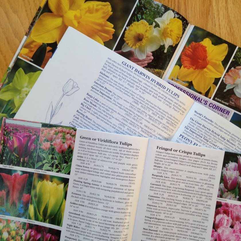 A flood of flower bulb catalogs!