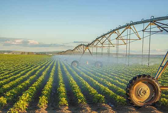 Grocery store produce being watered