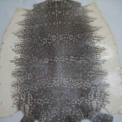 Genuine Lizard skin