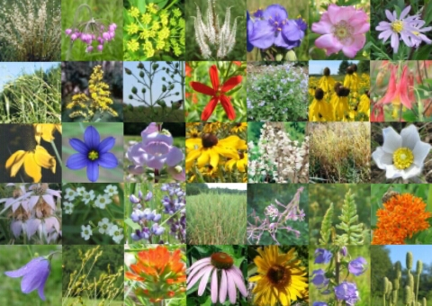 Hundred Acre Wood Native Seed Mix