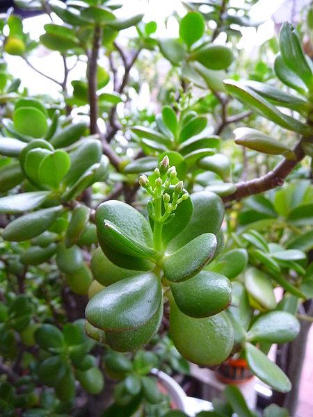 Feng Shui und die Wirkung der Pflanzen  Everyday Feng Shui