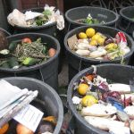 Stop the Carnage! No More Rotten Produce in the Garbage