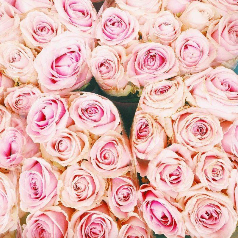 #rosestagram #rosesofinstagram #rosesonly #pinkroses