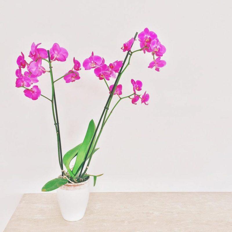 in ogni angolo i miei fiori preferiti #orchid #termedisaturnia #orchidee