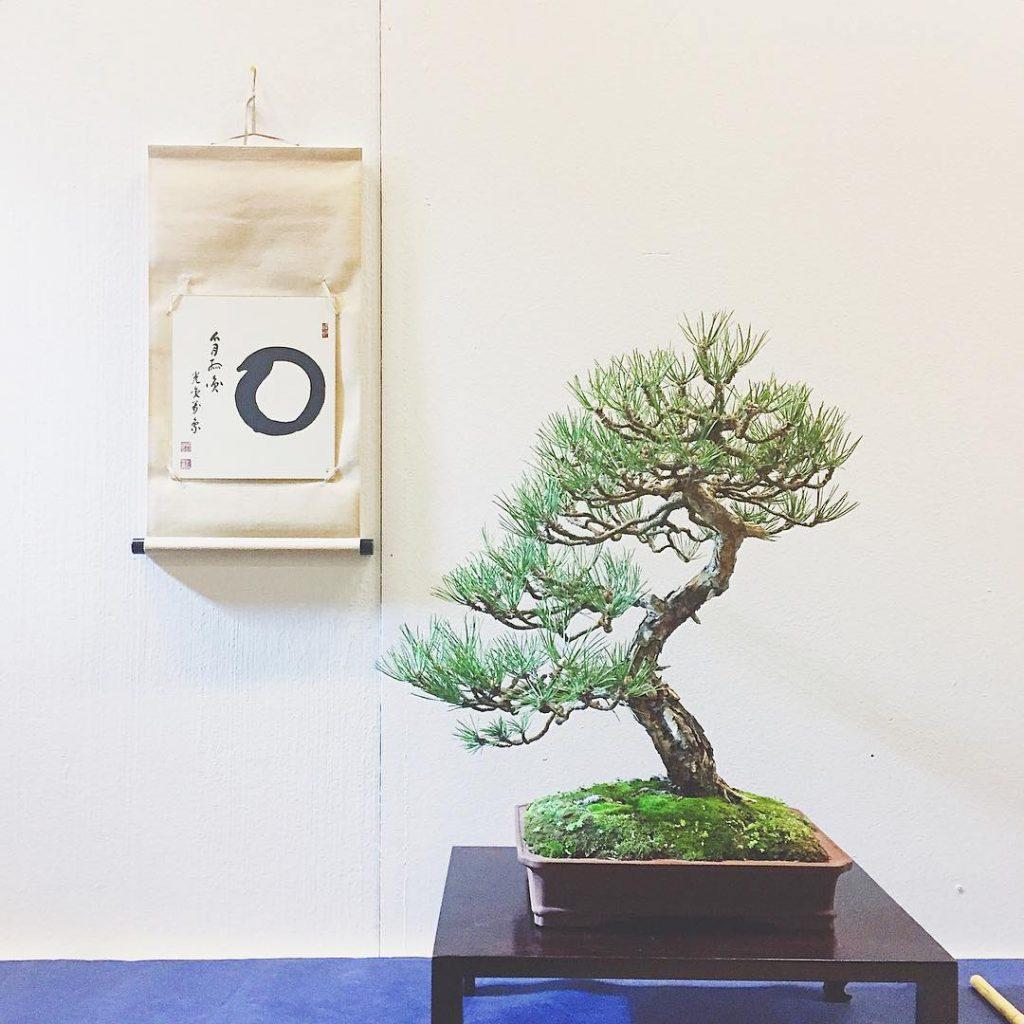 Balance #bonsai #bonsaitree #japanfestival #festivalgiapponese #lailac
