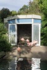 fenicotteri luisenpark