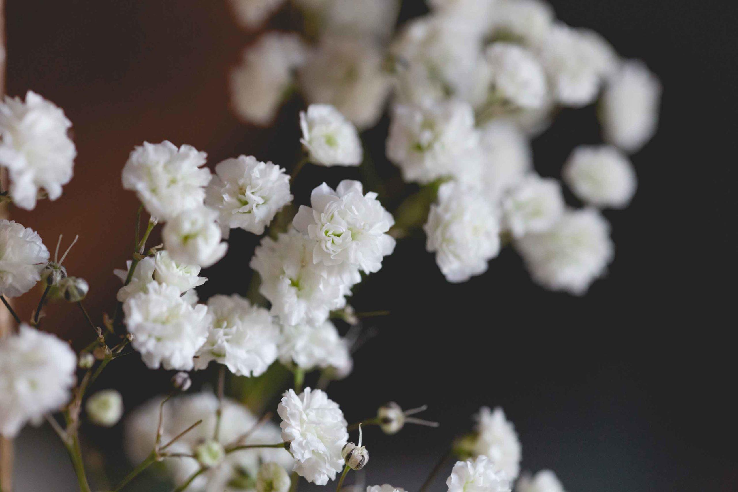 gypsophila-de-i-fiori-di-vale