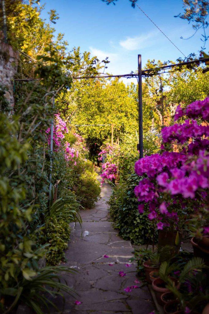giardino pieno di azalee e fiori