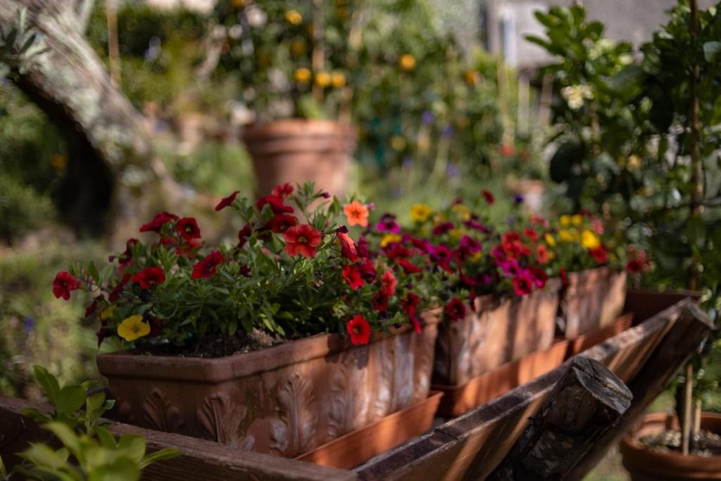 fiori nei giardini privati di buggiano castello