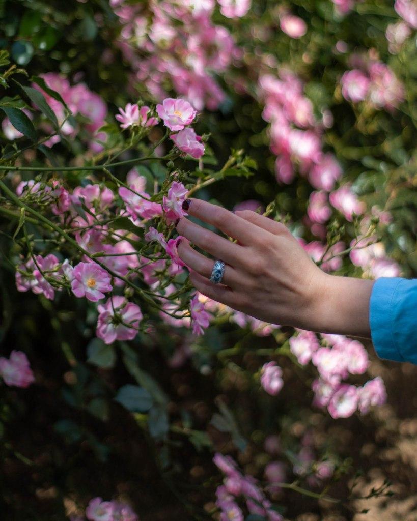 dettaglio mano che vuole prendere delle rose