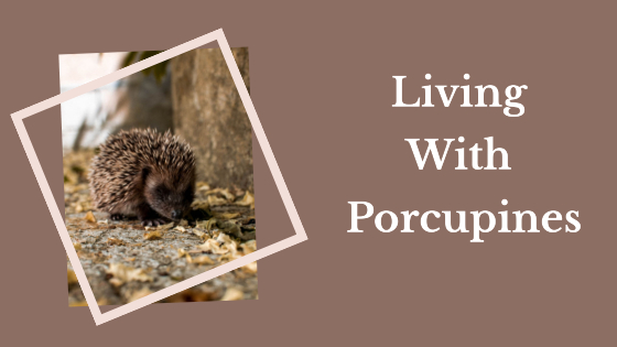 Living With Porcupines