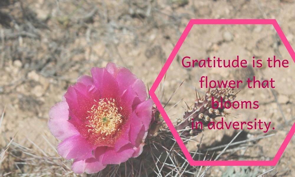 Gratitude Is The Flower That Blooms In Adversity #everydaygratitude #writebravely