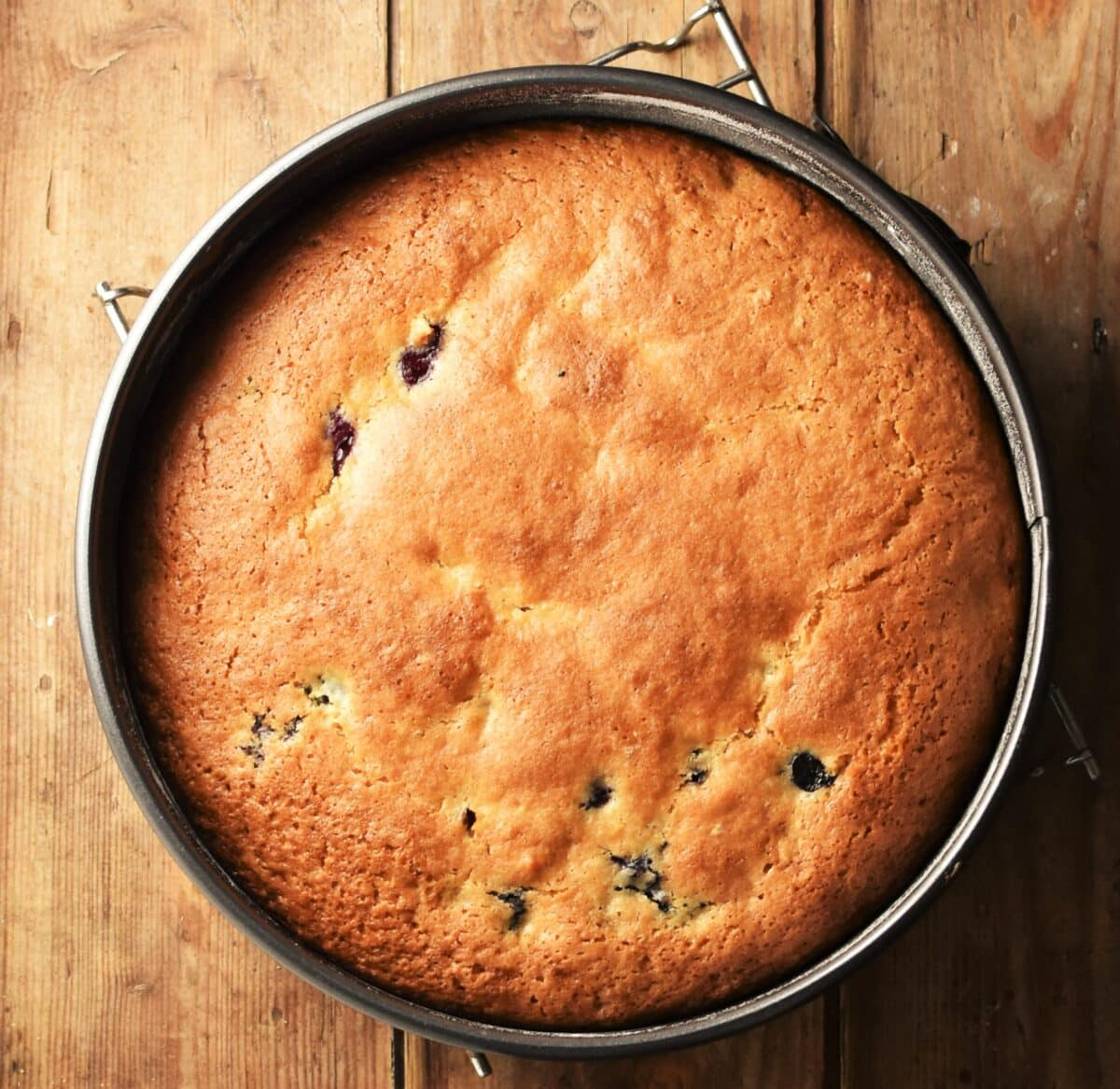 Baked blueberry cake in pan.