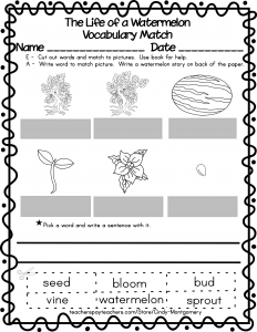 The Life of a Watermelon vocabulary matching worksheet