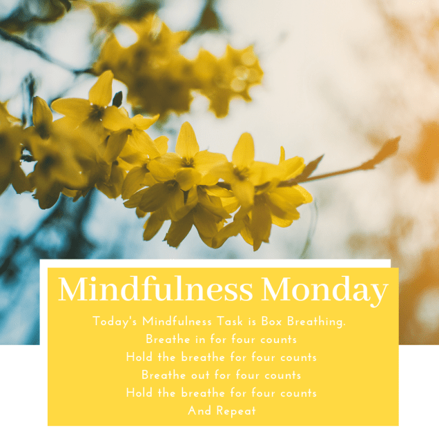 White text in mustard yellow box 'mindfulness monday. Today's mindfulness task is box breathing. Breathe in for four counts. Hold the breathe for four counts. Breathe our for four counts. Hold the breathe for four counts and repeat.'  Background image is yellow blossom on a tree.