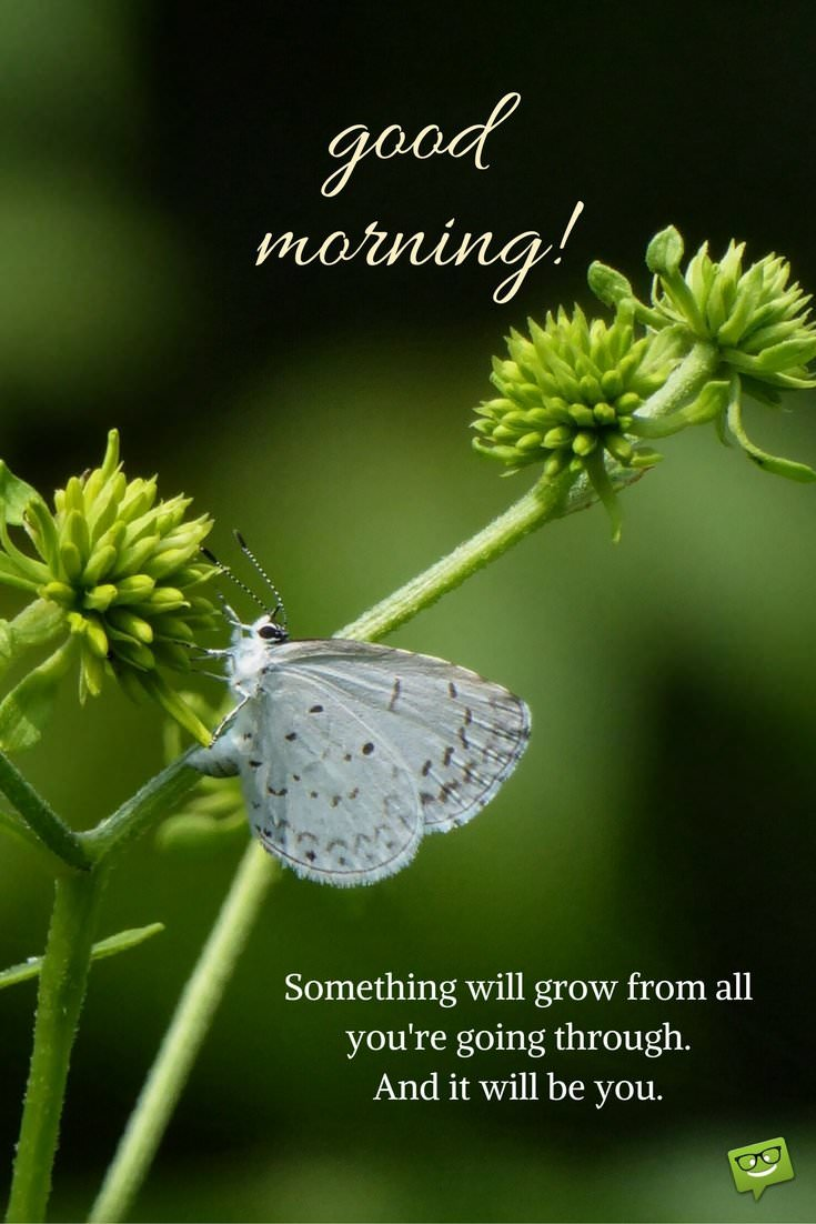 Good Morning Coffee And Butterfly