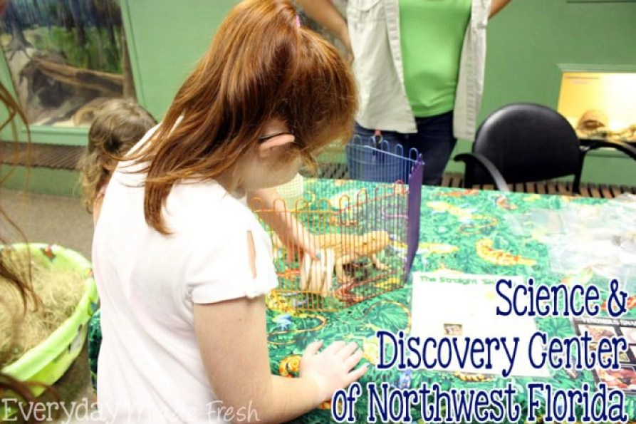Visiting Panama City Beach, and want to spend the day doing something other than getting sandy? Check out the Science & Discovery Center of Northwest Florida! | EverydayMadeFresh.com