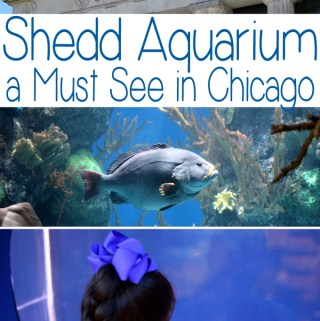 Visiting Chicago for PIR Weekend – Shedd Aquarium is a Must See and Do!