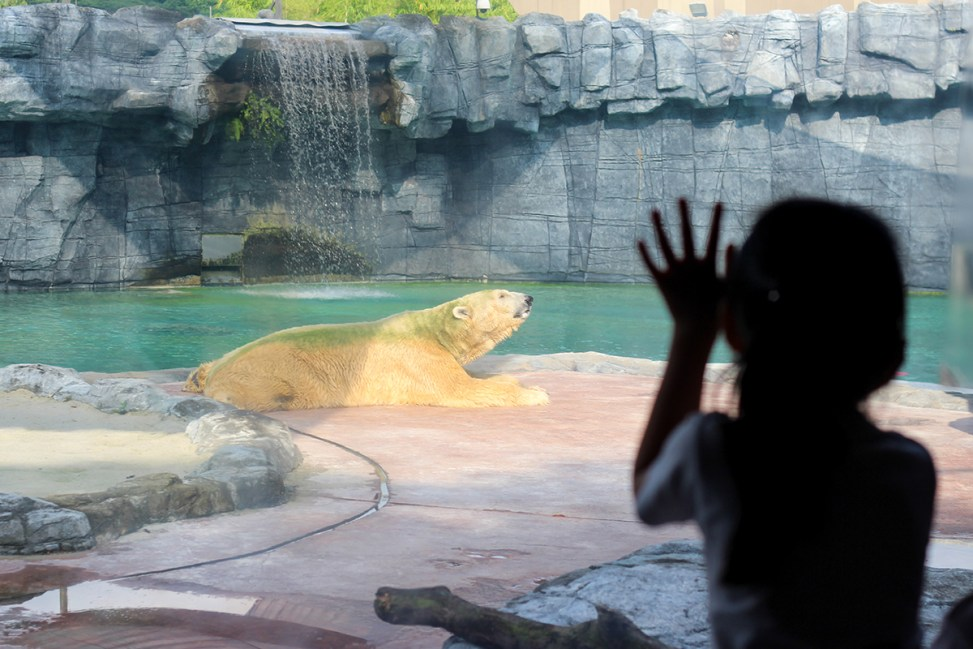 Dissertation help service singapore zoo