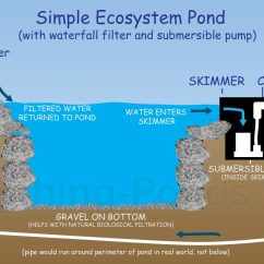 Pond Ecosystem Diagram Office Lan Network Everything Ponds Complete Kits