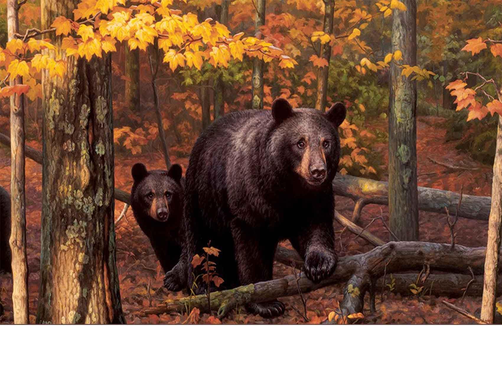 Indoor  Outdoor Fall Bear Insert Doormat  18x30