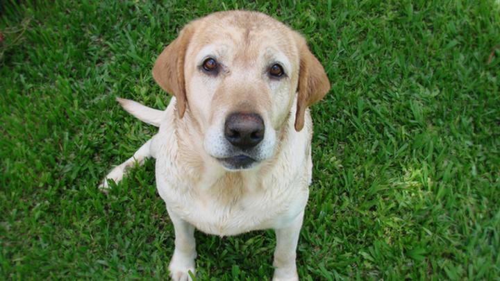 Dog Generic Public Domain Image 720
