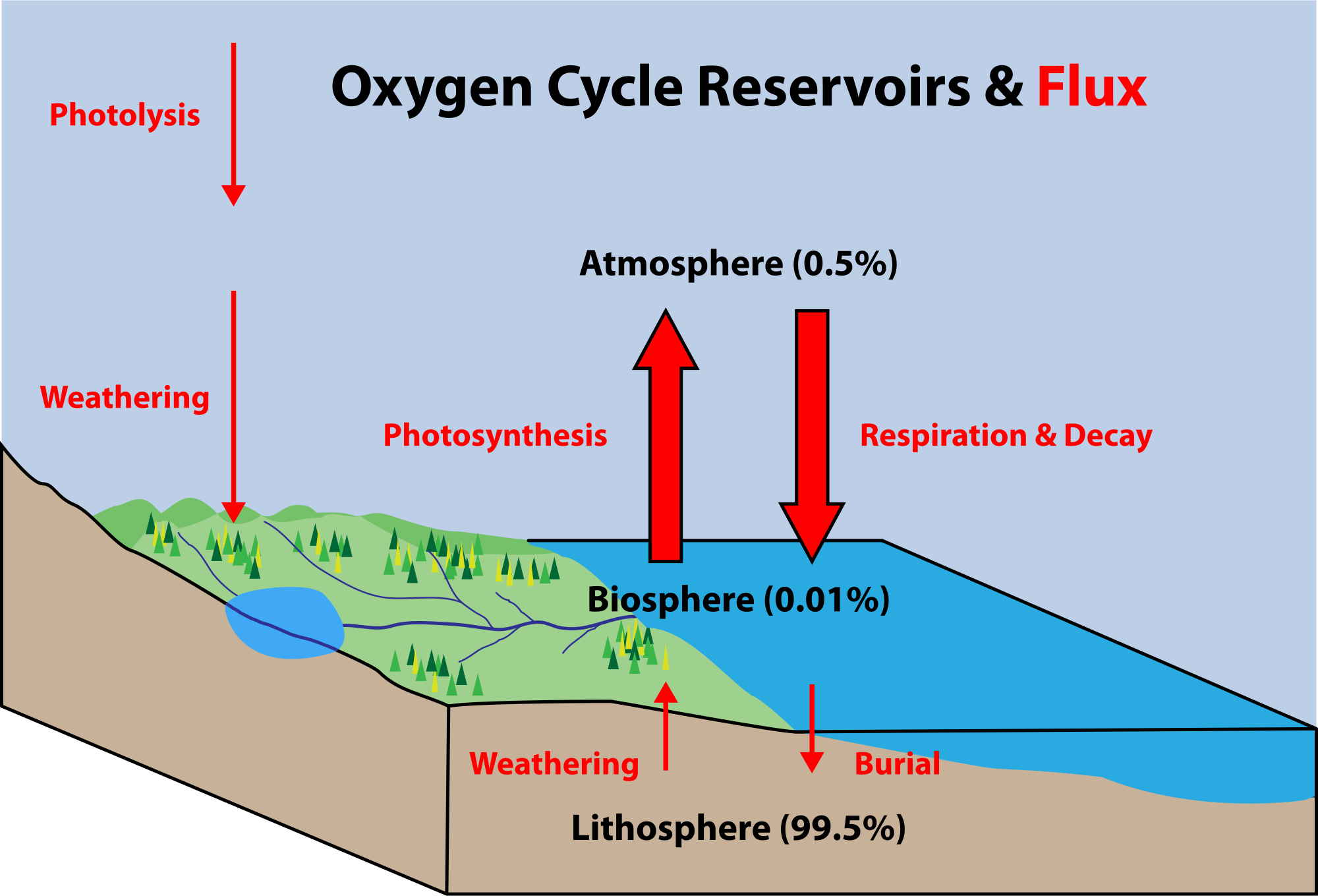 water ecosystem diagram vintage pin curls nutrient cycles biospheres to ecosystems siyavula
