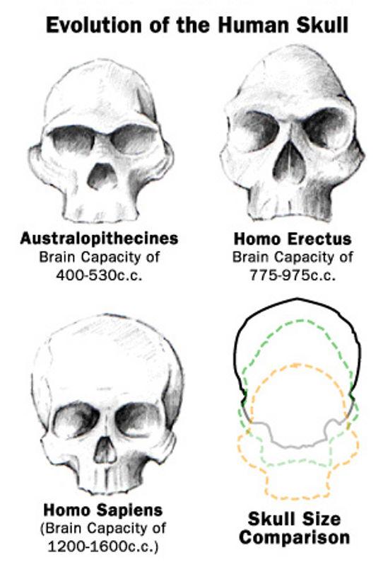 Geomagnetic evolution? Animal & Human electromagnetic