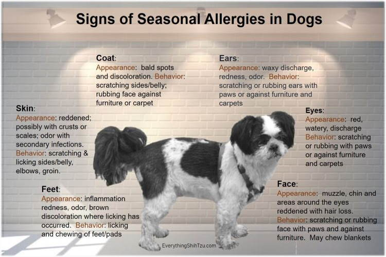 Seasonal Allergies In Dogs And What You Can Do to ...