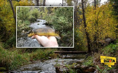 Spearfish Creek Fly Fishing Report for September 28, 2018