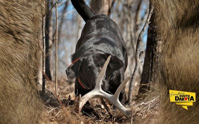 Shed Antler Hunting at Brown's Lodge & Hunting Ranch | 2020 NASHDA World Championship Qualifying Event