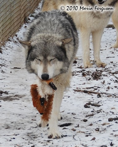 Wolf And Fox Pup Toy Picture