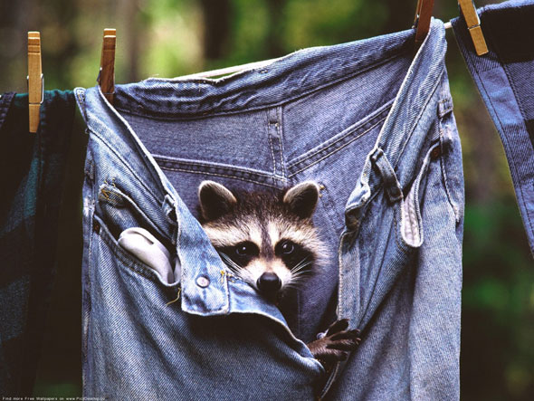 animals-and-jeans