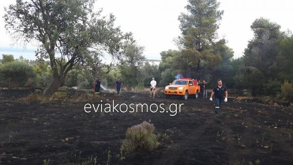 Μέσα σε μισή ώρα έθεσαν υπό έλεγχο τη φωτιά στο Καστέλι Ερέτριας (φωτο)