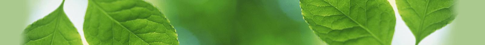 Hintergrundbild mit Blättern