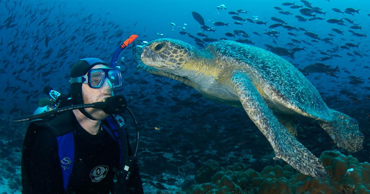 Por que é imperdível mergulhar em Galápagos? Confira 4 motivos!