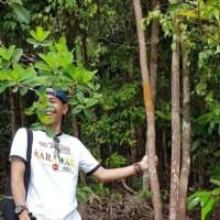 Pohon Tongkat Ali untuk kesehatan pria