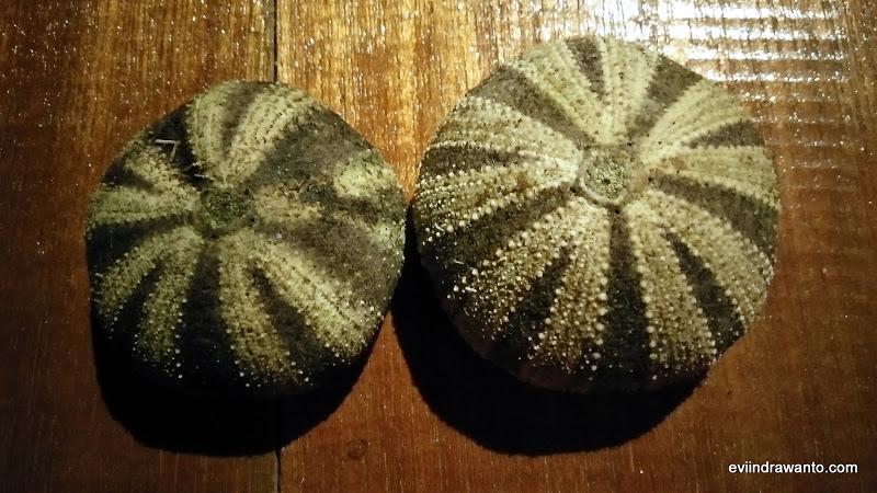 tehe-tehe makanan asli suku bajau