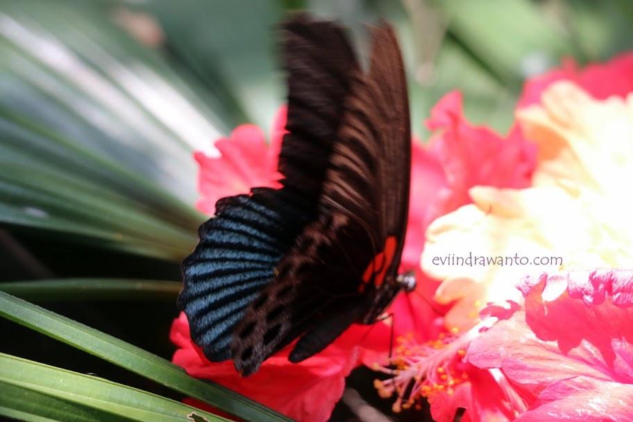 taman kupu-kupu gita persada 14