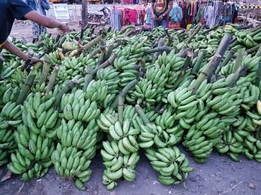 pisang salah satu pendapatan penduduk