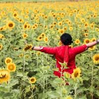 Main ke Ladang Bunga Matahari Lopburi