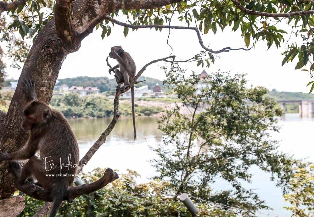 Foto Monyet-monyet atau Kera-kera di Goa Kreo