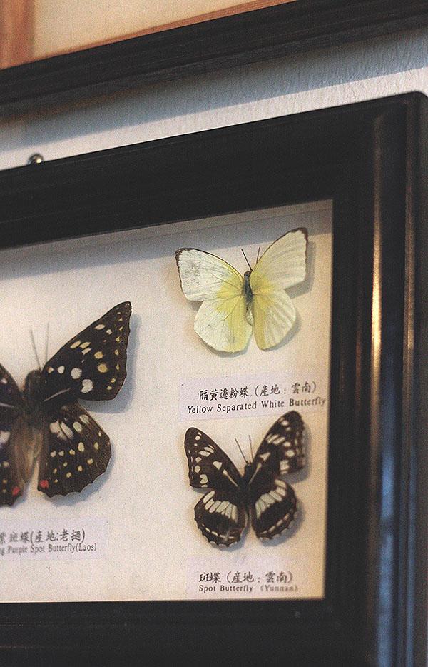 morebutterflies2