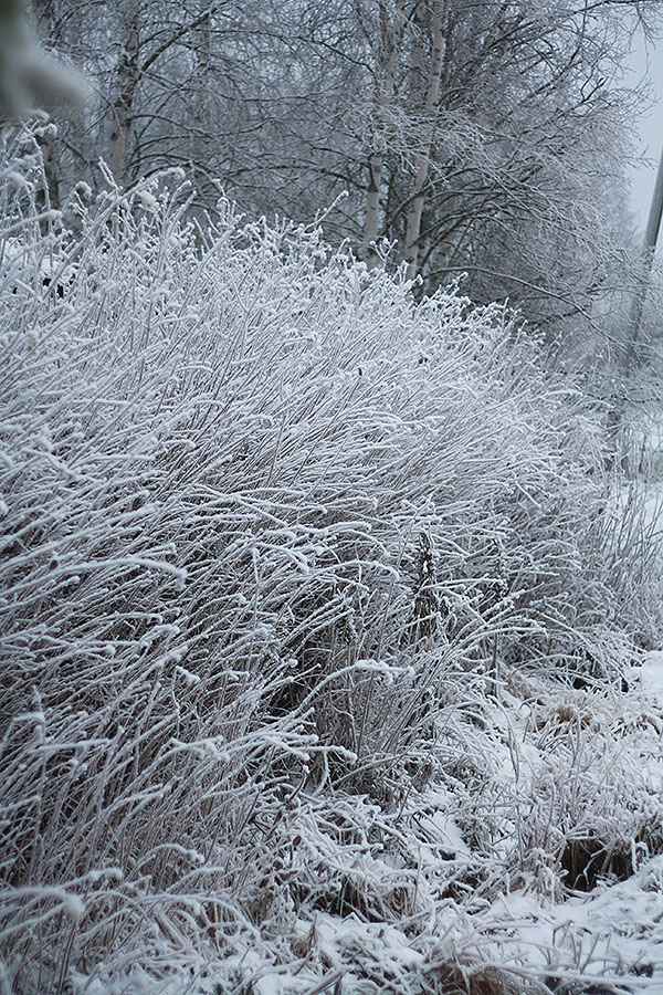 frost11