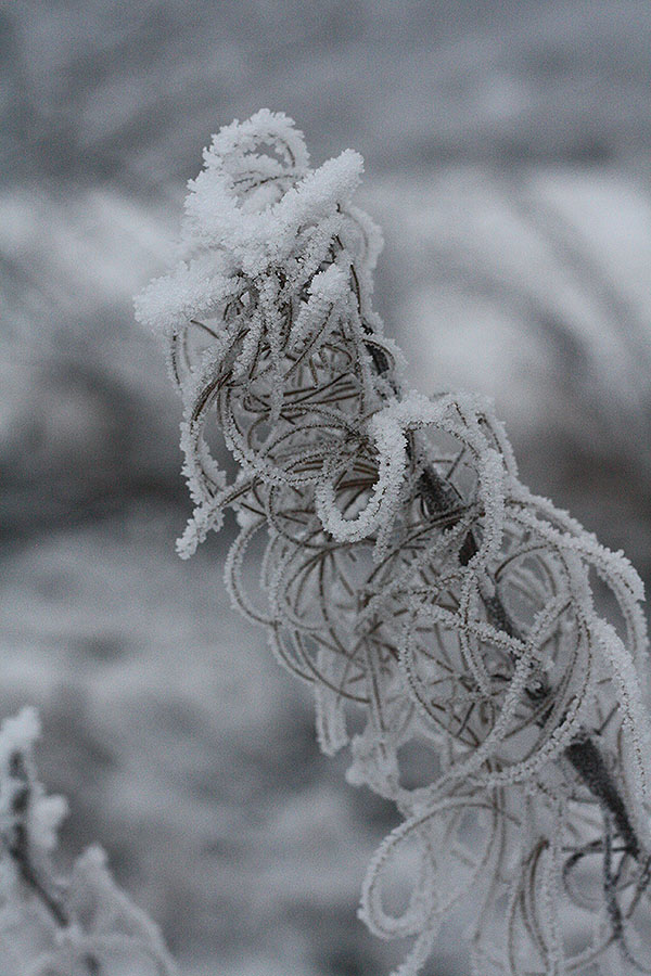 frost8