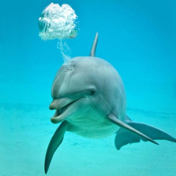 dolphin-bubbles_1890821i-600x600